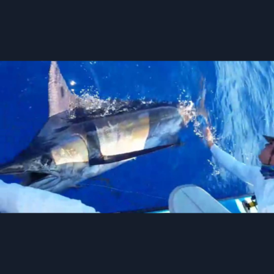 marlin-fishing-puerto-rico