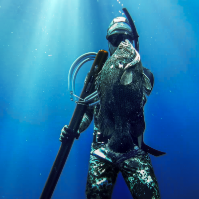 spearfish - triple tail